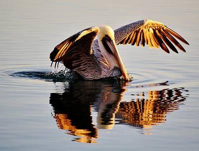 Pelican Reflection Art Print by Paulette Thomas