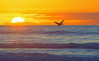 Photograph - Pelican Rising by AJ  Schibig