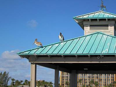 Photograph - Pelican Roof by MTBobbins Photography