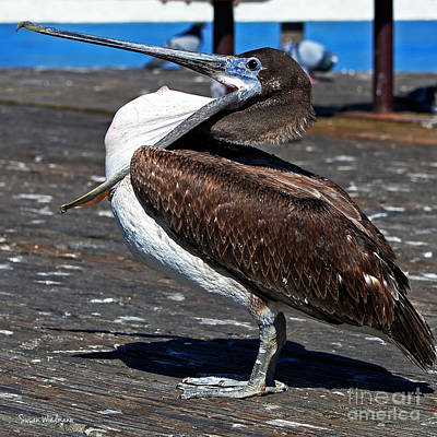 Photograph - Pelican Showing Off Pouch by Susan Wiedmann