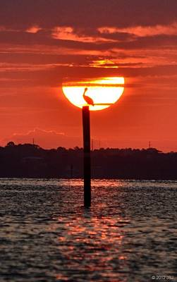Photograph - Pelican Silhouette Sunrise On Sound by Jeff at JSJ Photography