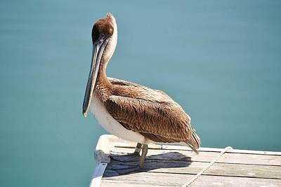 Pelican - Sitting On The Dock Of The Bay Print by Paulette Thomas