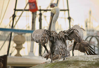 Pelican Strut Art Print by Donna Greene