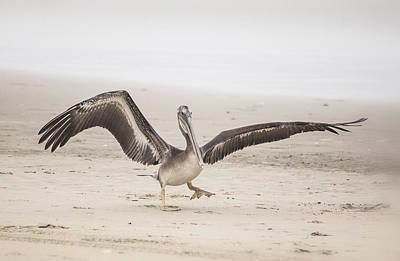Pelican Strut Art Print