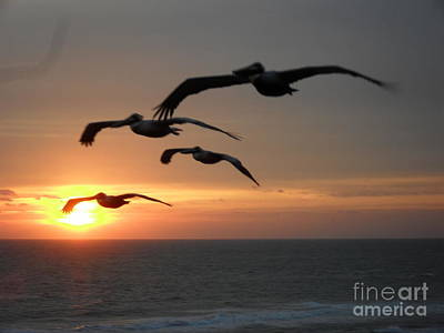 Photograph - Pelican Sun Up by Laurie L
