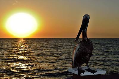 Photograph - Pelican Sunset 2 by Richard Zentner