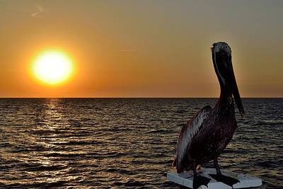Photograph - Pelican Sunset 3 by Richard Zentner