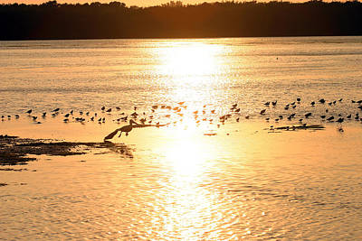 Photograph - Pelican Sunset by Mark Russell