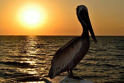 Photograph - Pelican Sunset by Richard Zentner