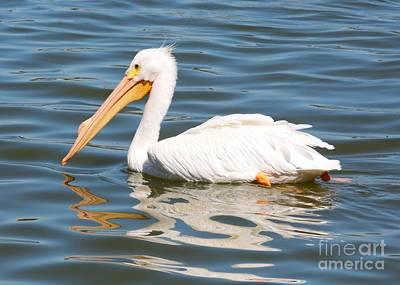 Photograph - Pelican Swirls by Carol Groenen