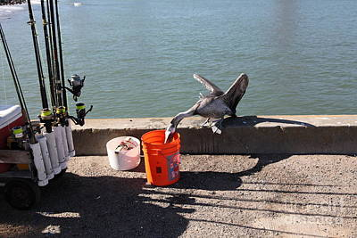 Frisco Pier Photograph - Pelican Thief At San Francisco Torpedo Wharf Fishing Pier 5d21667 by Wingsdomain Art and Photography