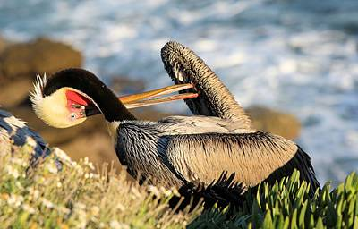 Photograph - Pelican Twisting by Jane Girardot
