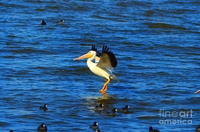 Photograph - Pelican Walking On Water by Peggy Franz