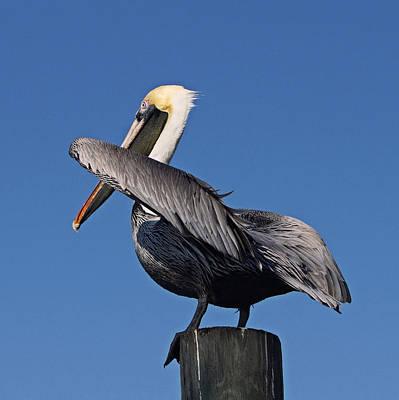 Photograph - Pelican Wings by Carmen Del Valle
