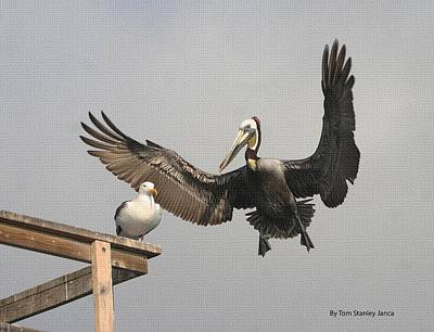 Art Print featuring the photograph Pelican Wins Sea Gull Looses by Tom Janca