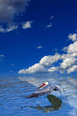 Photograph - Pelican With Clouds by Bob Coates