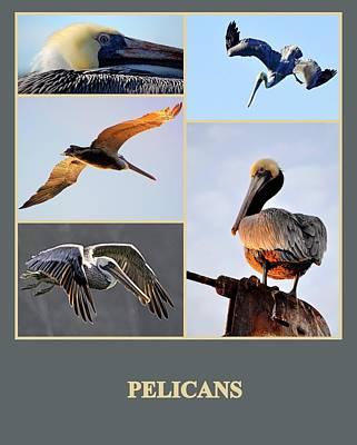 Photograph - Pelicans by AJ  Schibig
