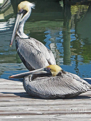 Photograph - Pelicans At Rest by Joan McArthur