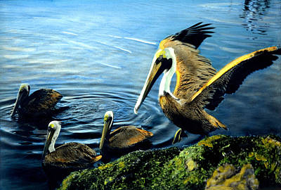 Pelicans Art Print by Cindy McIntyre