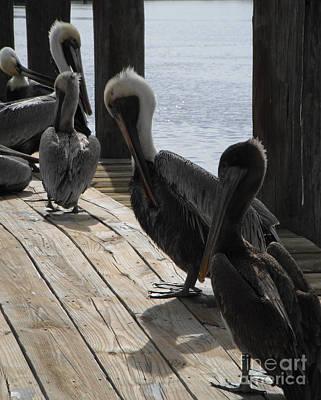 Photograph - Pelicans Dockside by Tom Brickhouse