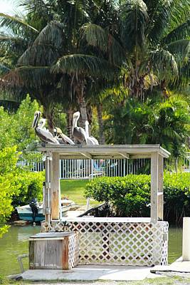 Photograph - Pelicans' Fish Prep Station by R B Harper