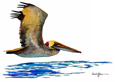 Da137 Pelican Over Water By Daniel Adams Art Print