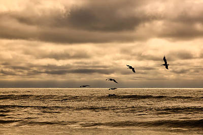 Photograph - Pelicans Flight by Denis Lemay