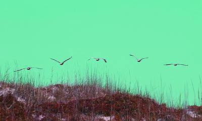 Pelicans In A Row 9 Art Print