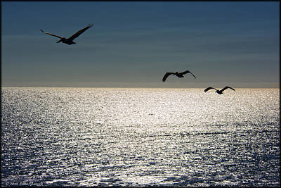 Photograph - Pelicans In Flight by Erika Fawcett