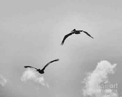Pelicans In Flight IIi Art Print
