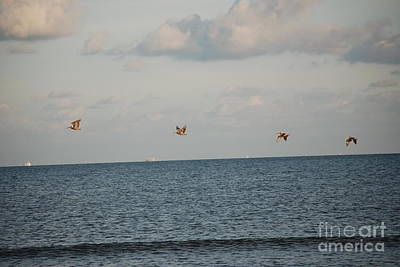 Photograph - Pelicans In Flight by Mark McReynolds