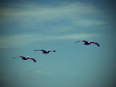 Beak Photograph - Pelicans In A Row 3 by Cathy Lindsey