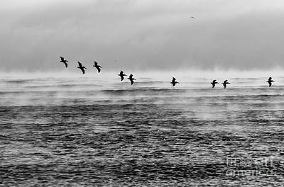 Photograph - Pelicans In The Mist by Lynda Dawson-Youngclaus