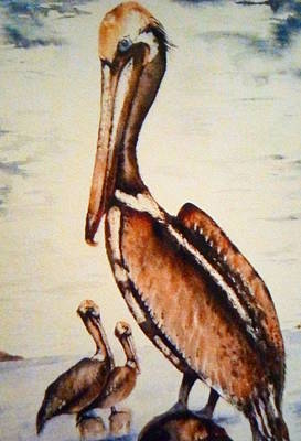 Sea Of Cortez Painting - Pelicans by J A Rix