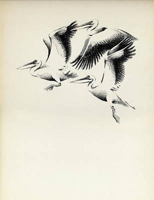 Drawing - Pelicans by Mamoun Sakkal