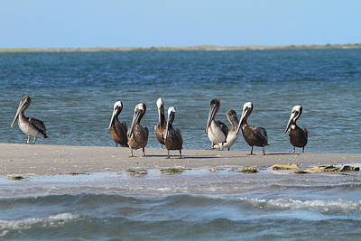 Pelican Photograph - Pelicans Of Bird Island 7 by Cathy Lindsey