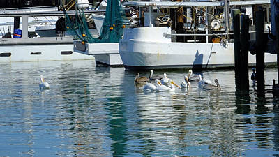 Photograph - Pelicans Of Galveston Fishing Marina by Judy Wanamaker