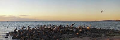 Pelicans On Rocks In La Paz, Baja Art Print