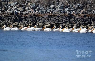 Pelicans On Slough  Art Print