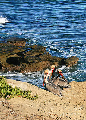 Photograph - Pelicans On The Cliff - La Jolla Cove by Gabriele Pomykaj