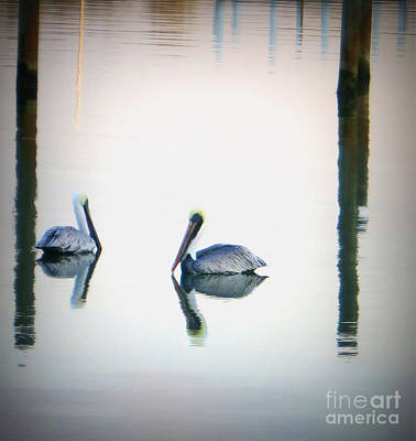 Photograph - Pelicans by Patricia Januszkiewicz