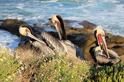 Photograph - Pelicans Preening by Jane Girardot