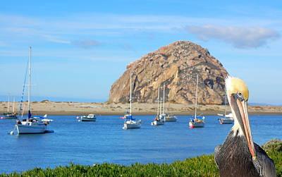Photograph - Pelicans Rock by AJ  Schibig