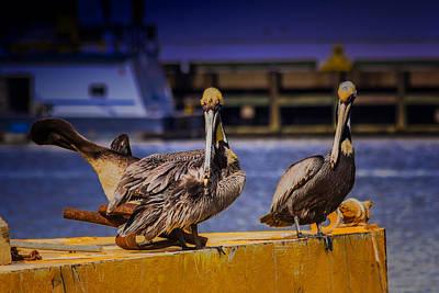 Pelican's Roost Art Print by Barry Jones