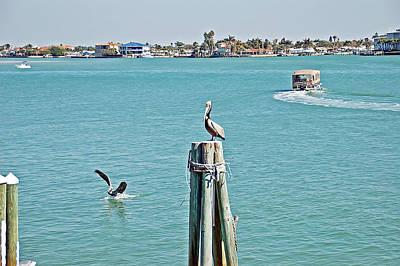 Photograph - Pelicans Rule by Aimee L Maher ALM GALLERY