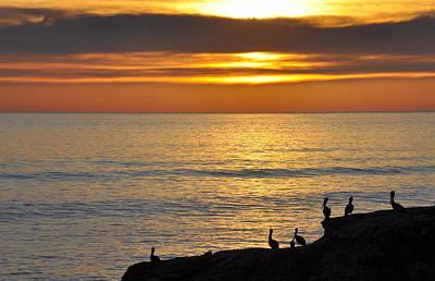 Photograph - Pelicans Sunset View by AJ  Schibig