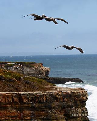 Art Print featuring the photograph Pelicans by Theresa Ramos-DuVon