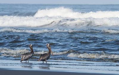 Photograph - Pelicans Watching The Surf by Angie Vogel