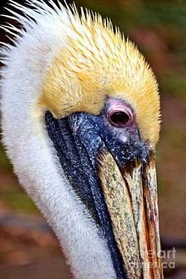 Pelikan Photograph - Pelikan by Bener Kavukcuoglu