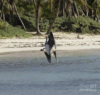Pelikan Photograph - Pelikan  by Salvador Penaloza